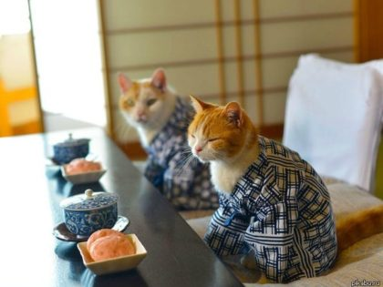 Японские продукты питания
